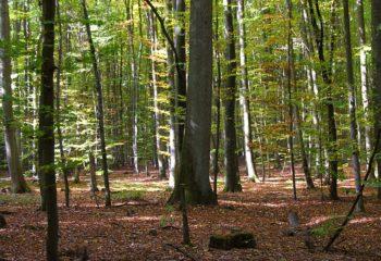 Gramschatzer_Wald_mit_seiner_typischen_Laubwald-Prägung_Foto_2007_Wolfgang_Pehlemann_Wiesbaden_DSCN3168